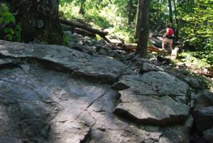 A nap betűzött az erdőbe, az emelkedő második felén kisebb kőfolyásokon is átbukdácsoltunk...