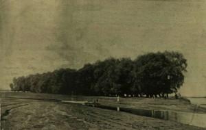 Az Eugen-sziget (Korabeli lap fotója 1895 körül - internet)